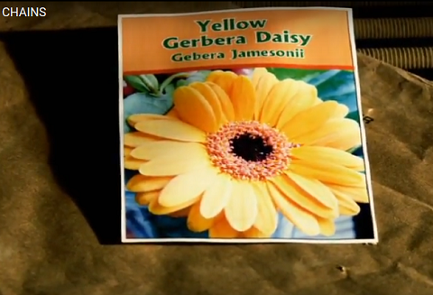 "Photo of a seed packet, from short film ""Chains"""